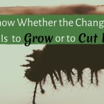 How to Know When the Change You Need Is to Grow or to Cut Back