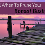How and When To Prune Your Bonsai Business