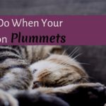 What to Do When Your Motivation Plummets